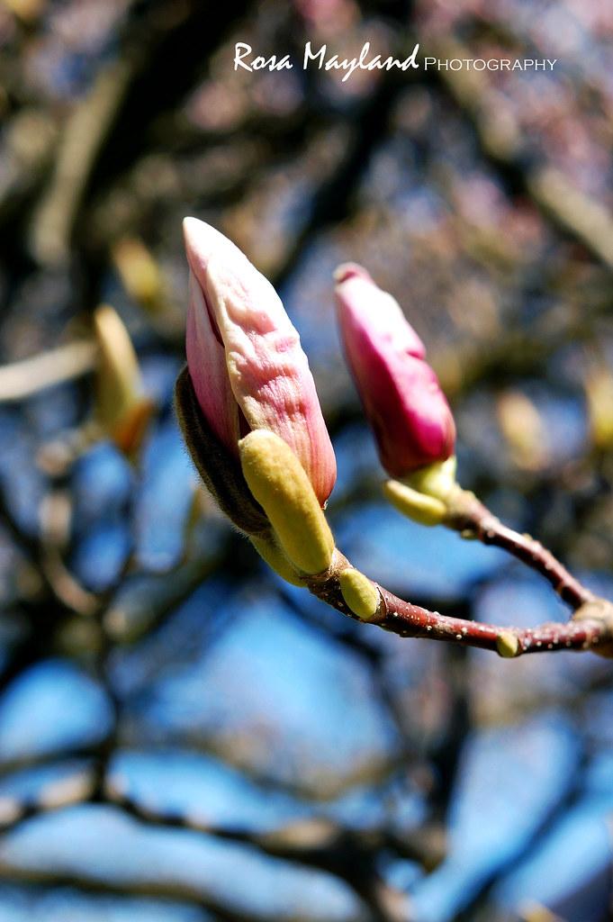 Spring 2013 4 3 bis