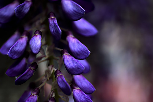 Nature's creations - more purple