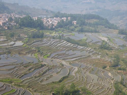 Yunnan13-Yuanyang 8 (4)