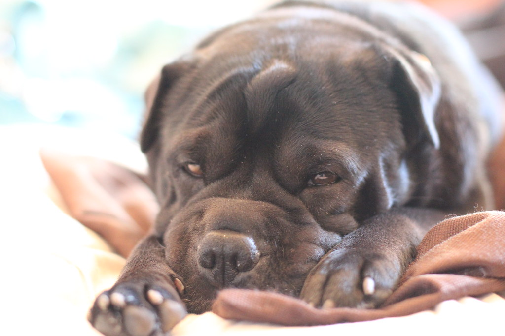 An Easy Home Cure Cherry Eye Remedy Old Town Home - 16 animals way chilled even care right now