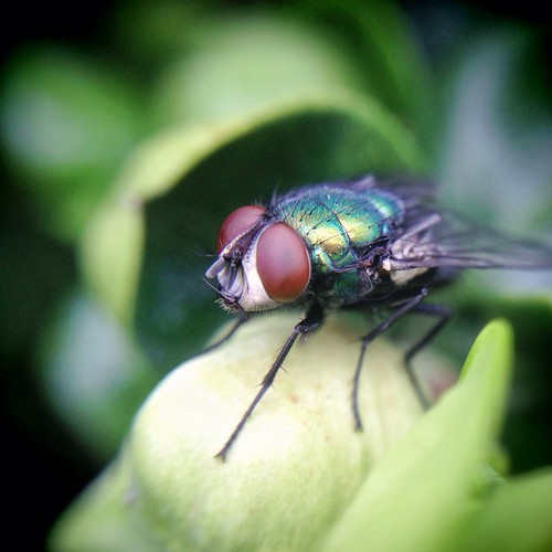 iphone macro fly