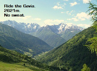 The Gavia homepage ad 340 w x 250 h