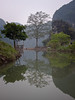 Tree Reflections in Ninh Binh Province, Vietnam
