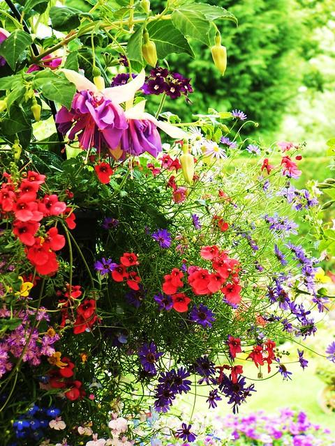 garden 070