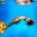 Twig the Fairy in Mermaid Form by gbrummett