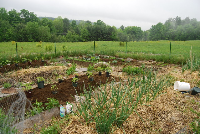field garden1