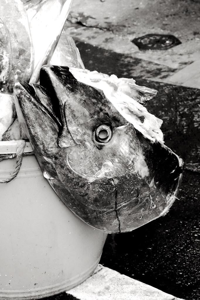 Tuna head, Tsukiji outer market