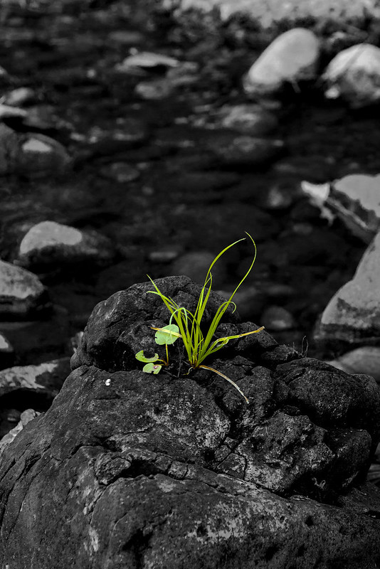 Life Rising [re-crop]