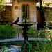 Montpellier - visite du Jardin des Plantes