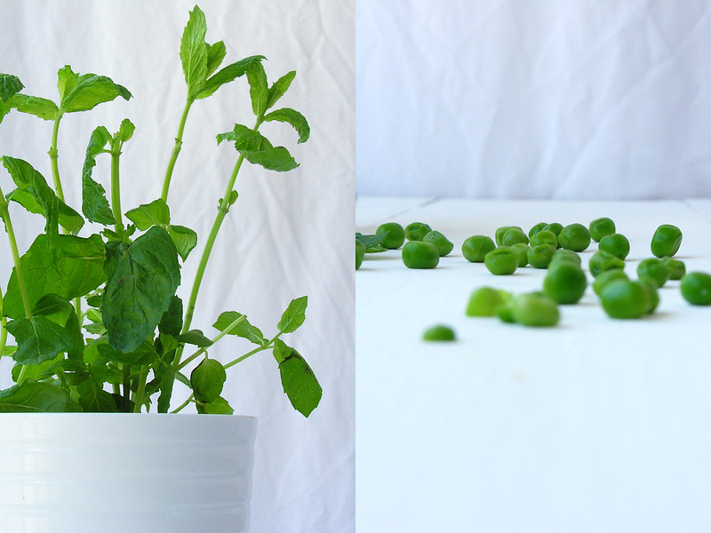 menta e ervilhas / mint and peas