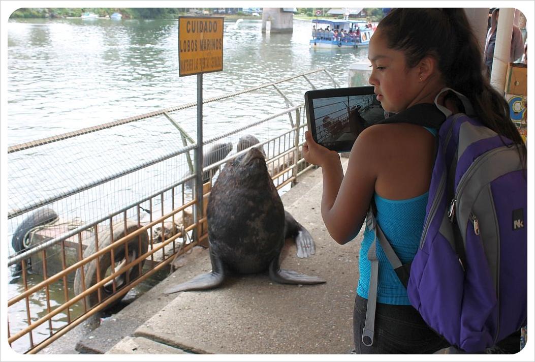 valdivia sea lion ipad photo