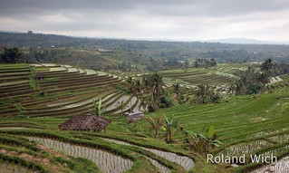 Bali - Jatiluwih Rice Terraces