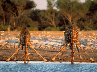 En el parque nacional Kruger.
