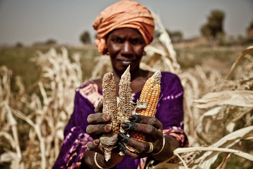 Sahel food crisis 2012: drought response in Mauritania