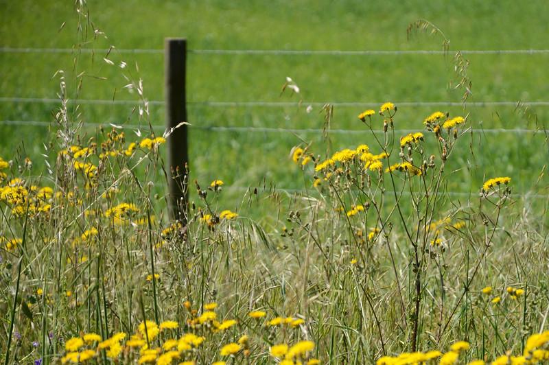 Verdes são os campos