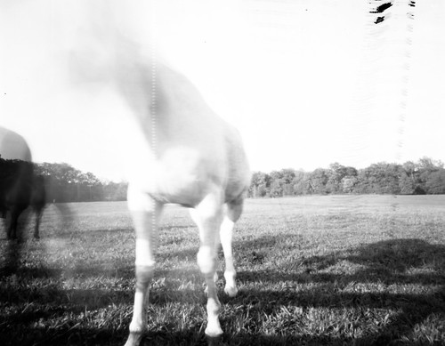 Anyway Here Are My Results From Shooting On Worldwide Pinhole Photography Day