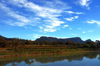 Reflecting on Table Mountain from Groot Constantia