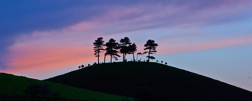 pink trees england sky pine sunrise landscape dawn country hill scenic dorset scots colmers nickwhitephotographycom colmerhillscenic