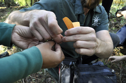 Pine Barrens Seed Collecting