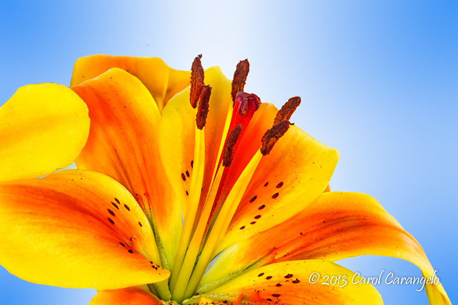 IMAGE: http://farm9.staticflickr.com/8121/8604220579_9ba581d110_b.jpg