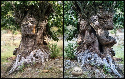 TwoOldMen Tree Before and After