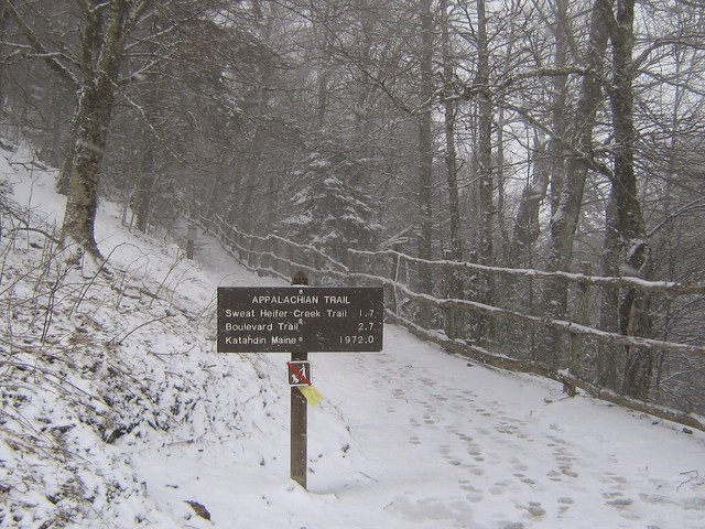 snow at newfound gap