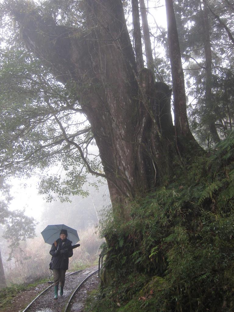 走在林道中,蒐集自然之聲,卻常常發現不再純粹,這些不能被收錄、背後的噪音,是否也代表著自然的申訴?圖片提供:范欽慧