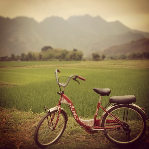 bicycle and paddy field