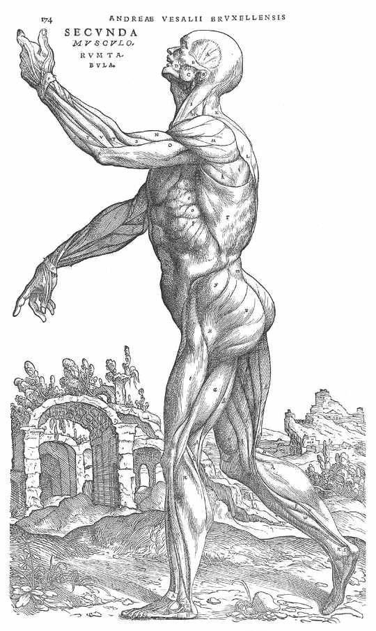 Vesalius and the Body Metaphor – The Public Domain Review