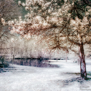 Nature-Infrared