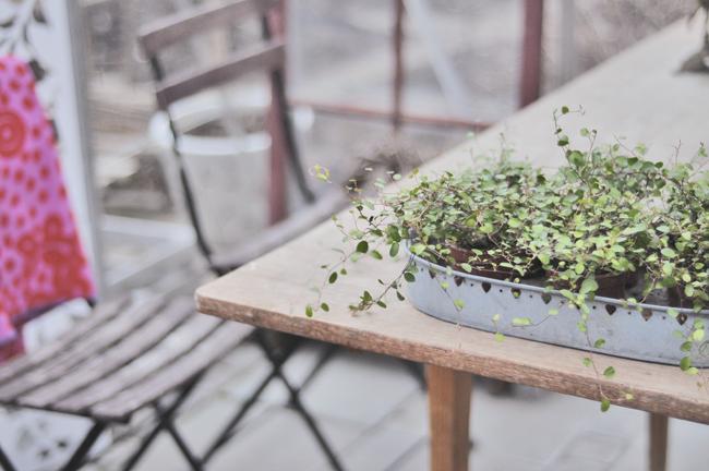 plättar i växthuset
