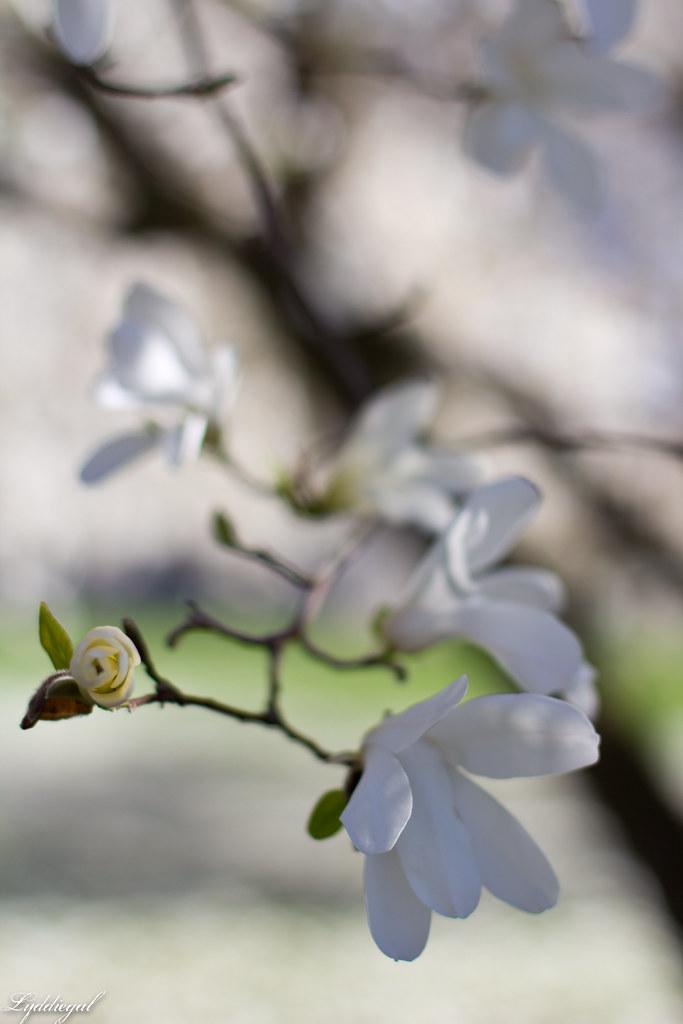 white flowers-1.jpg