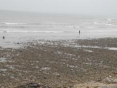 這個礫石灘是因凸堤效應所致,藻礁在其下。