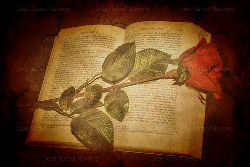 Una rosa, un libro