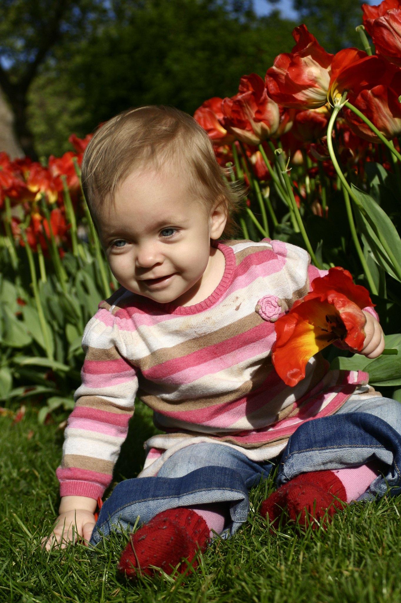 Tulips in Üsküdar.