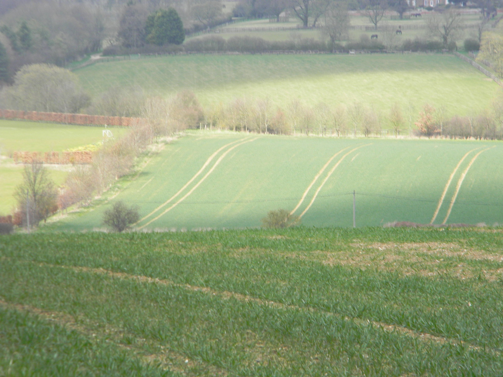 Striped field Wendens Ambo Circular