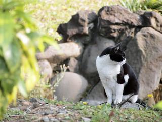 cat in resting