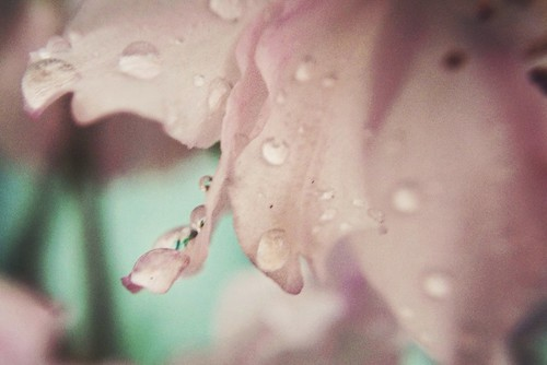 rain macro flower
