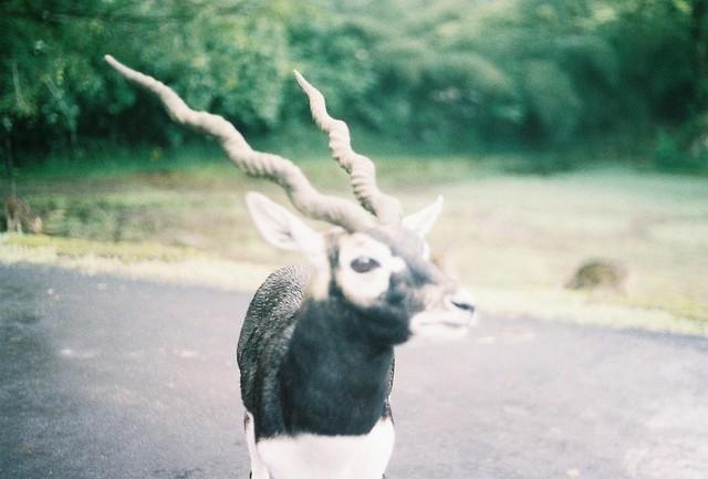 Animal #3