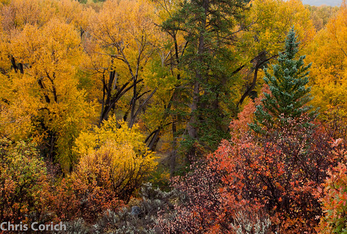 autumn usa canon colorado unitedstates roadtrip co autumncolor ef24105f4l 5dmkii cr864 littlecimarronroad cr864b littlecimarroncreekroad