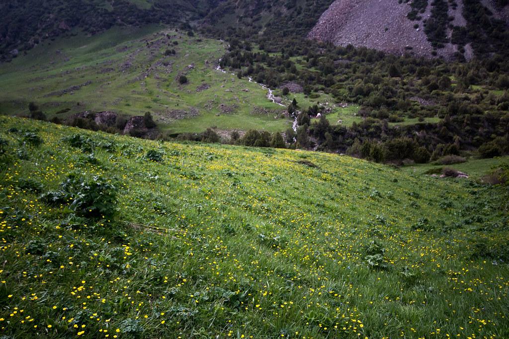 Shepherd Downhill