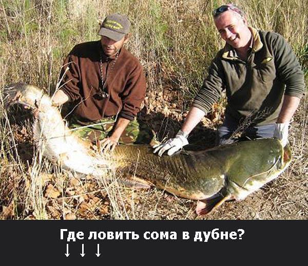 Где ловить сома в дубне?, Canon DIGITAL IXUS 55