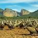 Les vautours de la Sierra de Guara (Aragon/Espagne) by PierreG_09