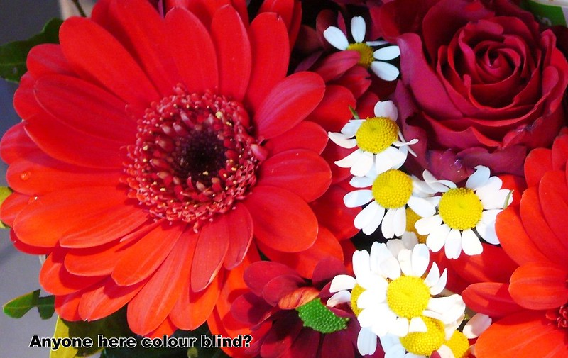 red flowers and daisies