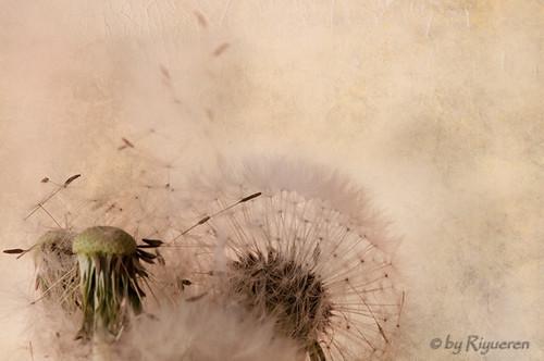 Wings of dream