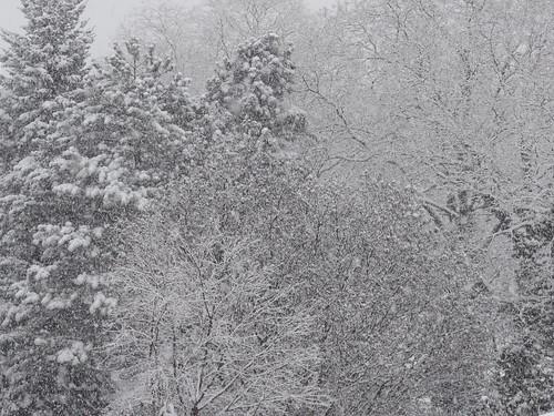 Im Winter, der Himmel grau, die Erde weiß, die Bäume kahl, die Büsche voll Eis, ein Lächeln die Flure zagen, willkommen blinkendes WinterEis 0522