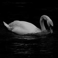 Stockers Lake, Rickmansworth