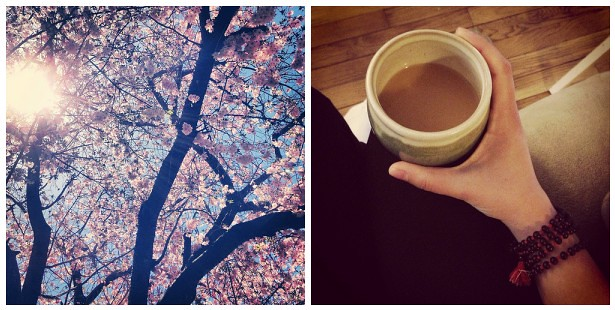 park, chai