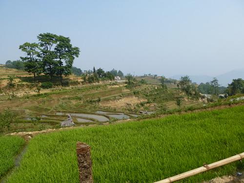 Yunnan13-Yuanyang 7 (1)