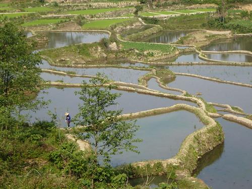 Yunnan13-Yuanyang 3-Huangcaoling (2)
